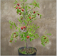 zao shu plant tree hot sale sweet fruit Jujube tree seedlings for plant