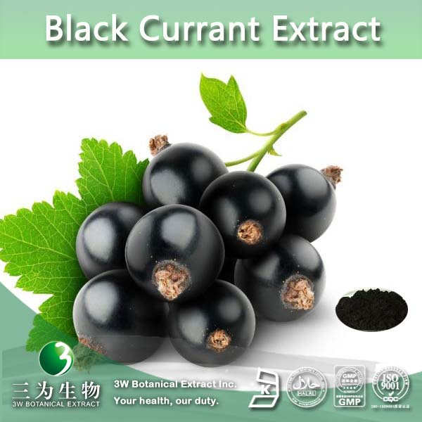 Factory supply Blackcurrant extract,Proanthocyandins 70%,Anthocyanin 25%