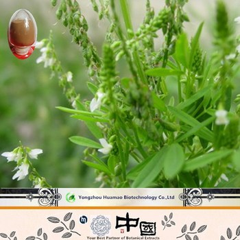 free sample GMP supplier raw material sweet clover melilotus suaveolens coumarin price