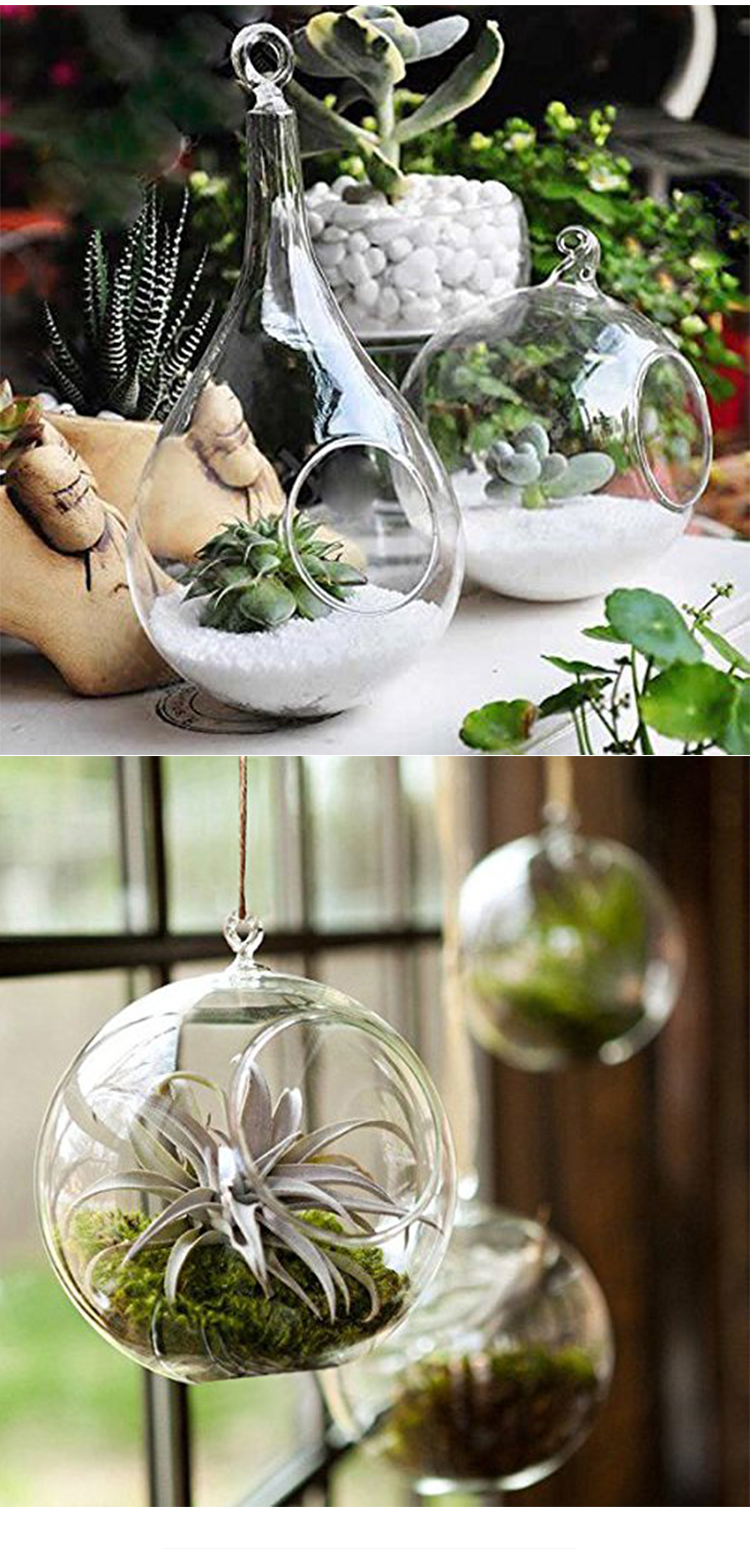 Cheap Home Decorations Air Plant Borosilicate Clear Wall Hanging Ball Glass Terrarium Vase Buy Hanging Teardrop Shaped Plant Terrarium Glass Vase Clear Glass Ball Vase Hanging Glass Globes For Plants Product On Alibaba Com