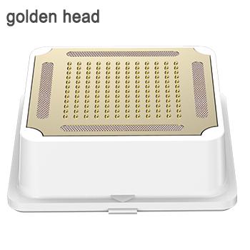 golden head 02