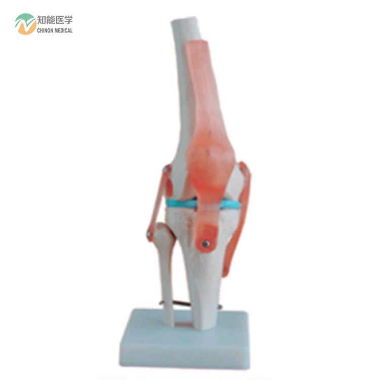 Venta al por mayor maqueta de la rodilla humana-Compre online los ...