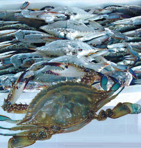 China frozen blue swimming crab wholesale supplier