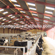 China factory supply good selling cow farm building and poultry farm house design
