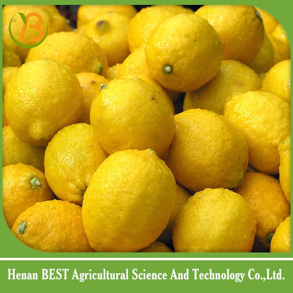 best price of lemon fresh/fresh lemon