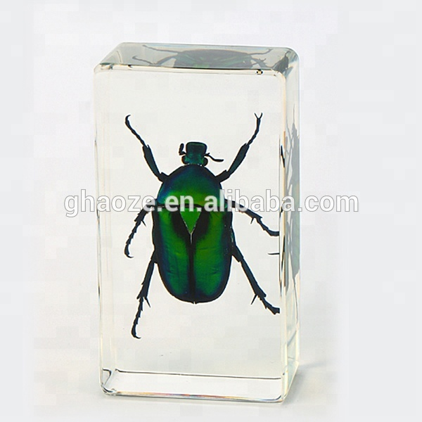 Clear <strong>Resin</strong> Real Insect Paperweight Insect In <strong>Resin</strong> Factory