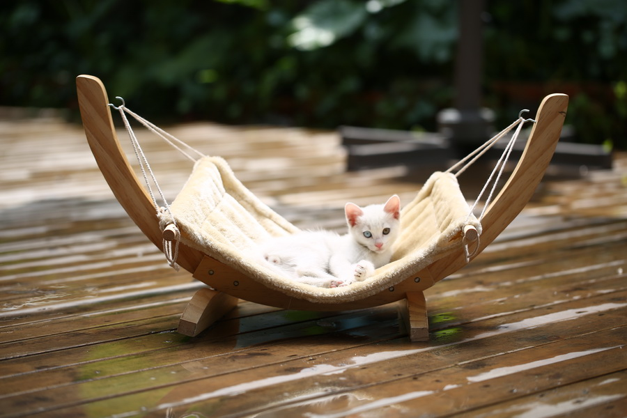 2018 Luxury cats hammock bed cats house pets beds