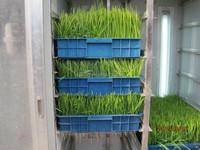 2017 New Type Hydroponics Animal Fodder Machine , barley sprout machine