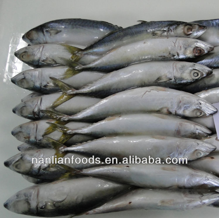 frozen fish importers in china