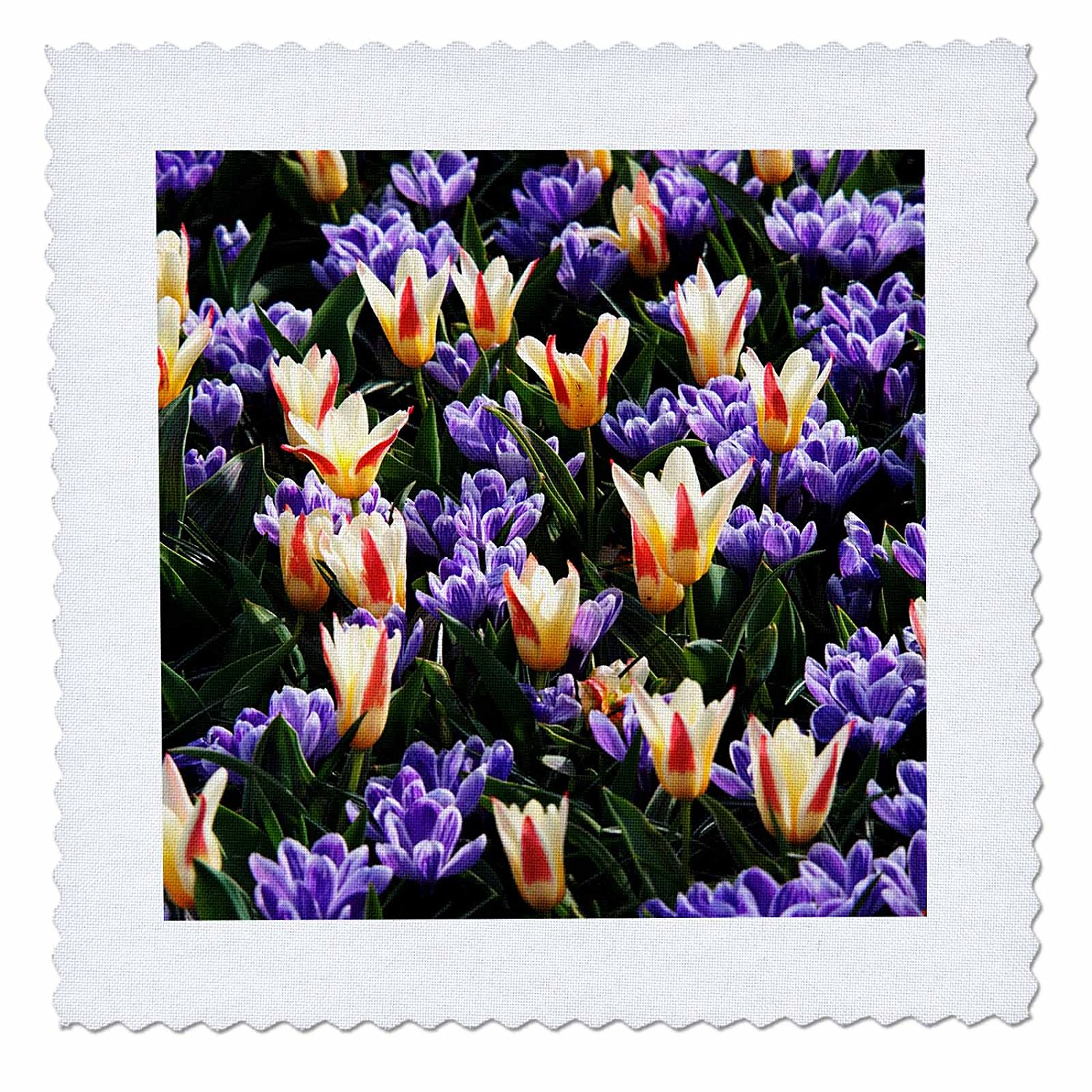3dRose Danita Delimont - Flowers - Netherlands, Flower Displays. - 8x8 inch quilt square (qs_277711_3)