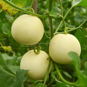 2017 Touchhealthy supply green hybrid musk melon seeds