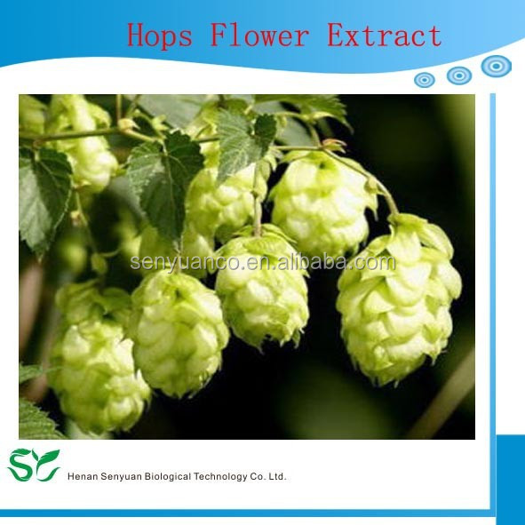 100% Nature Pure Organic high quality healthy Hops Flower extract