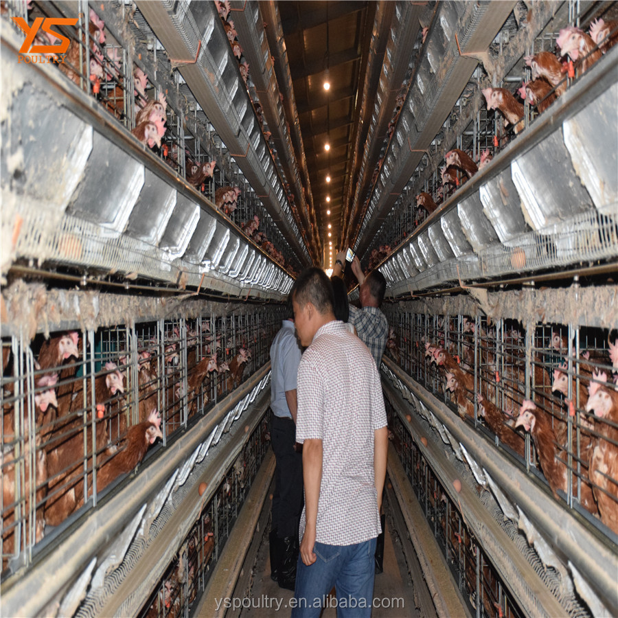 big discount foster farm chicken cages /poultry cage for laying egg chicken