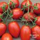 OP Egg shape high productive processing Roma VF tomato seed