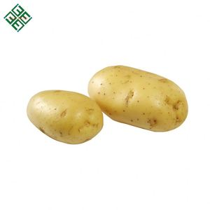 Fresh Organic Potato for Chips making or French fries
