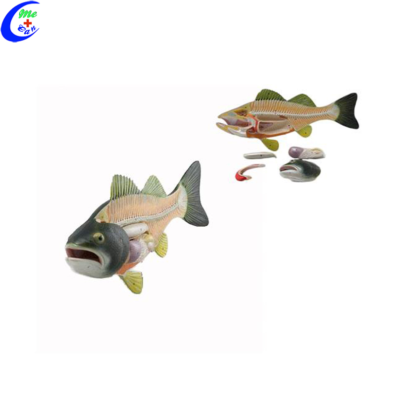 China Fish Anatomy Model, China Fish Anatomy Model Manufacturers and ...