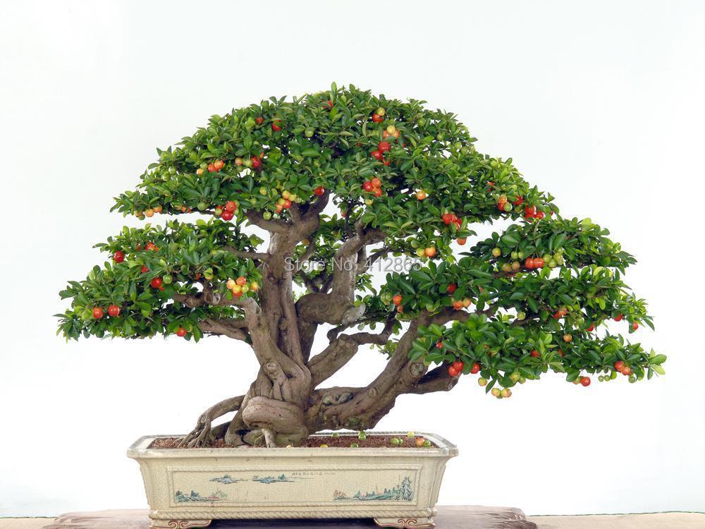 Großhandel Gehobene Zimmerpflanzen Brauchen Obst Topf Taiwan Mini