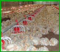 automatic animal feeder line for meat chicken (broilers)