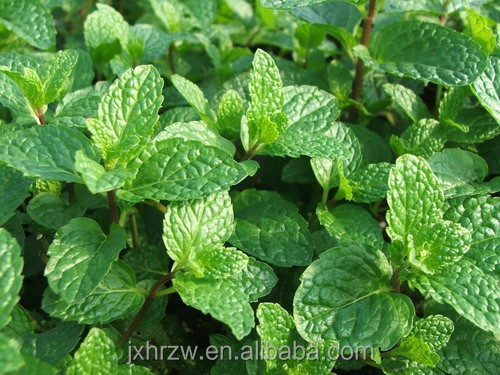 Natural Spearmint Essential Oil used as Fragrance additives of chewing gum