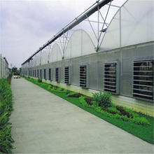 Production Center Multi Span Arched Roof PE Plastic Film Hydroponic Automated Greenhouse for Tomato