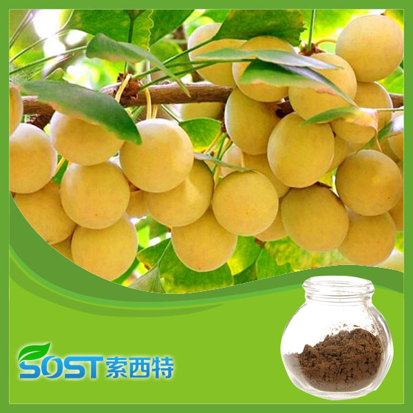 100% Natural cosmetic grade 24/6 ginkgo biloba extract