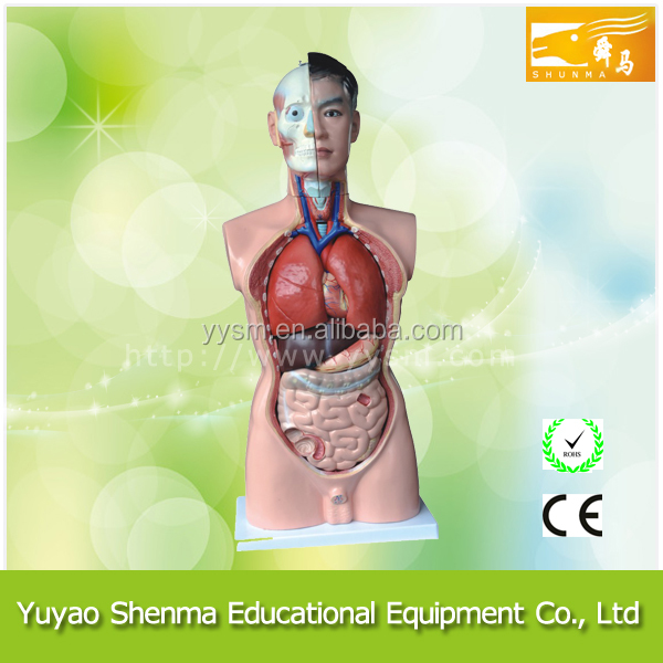 Medical human body model One stop supplies 3d human anatomy model