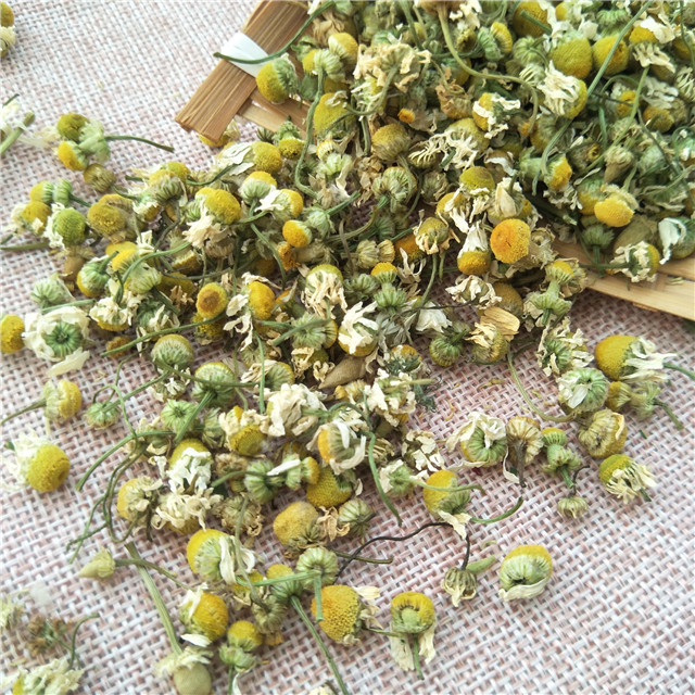 Yang gan ju China Premium Natural dried herb flores chamomillae flower tea price