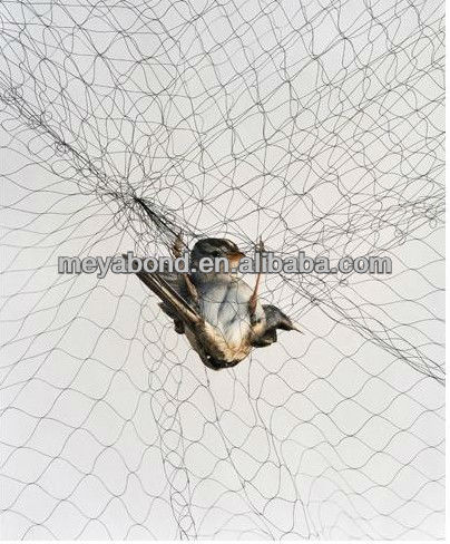 Anti bird netting / Cheap Bird Netting/Bird Trapping Net