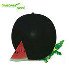 Densuke black round hybrid Organic vegetable watermelon hybrid seeds size pakistan