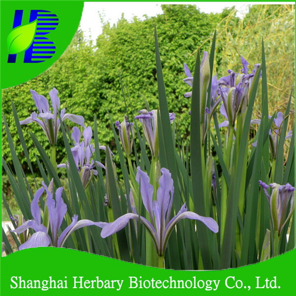 Shanghai Herbary supply beautiful flower seeds, orchid seeds