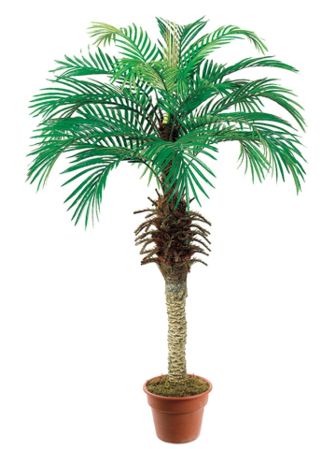 Pack of 2 Artificial Decorative Phoenix Silk Palm Trees 4'