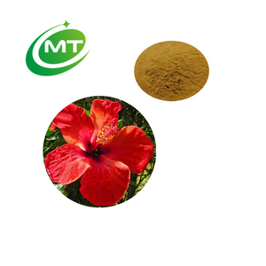 Hibiscus Rosa Sinensis Hibiscus Rosa Sinensis Suppliers And