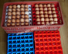 Packing transport tray plastic chicken egg tray 30 holes egg tray price