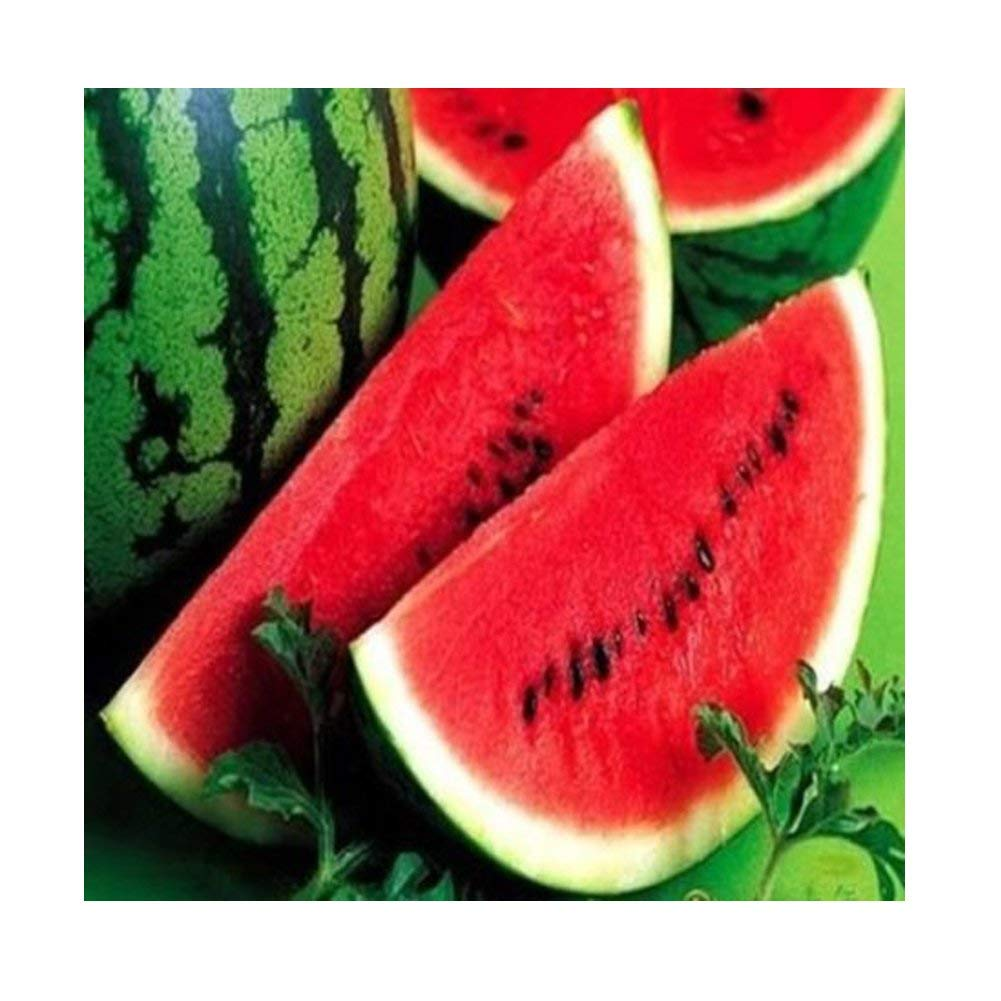 Higarden 5 Types of Watermelon Seeds Very Sweet Fruit Seed Watermelon Red Yellow Blue Green White