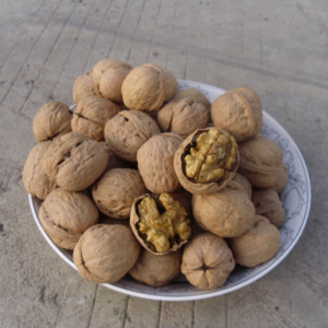 Turkish Indian dry fruit walnut for export