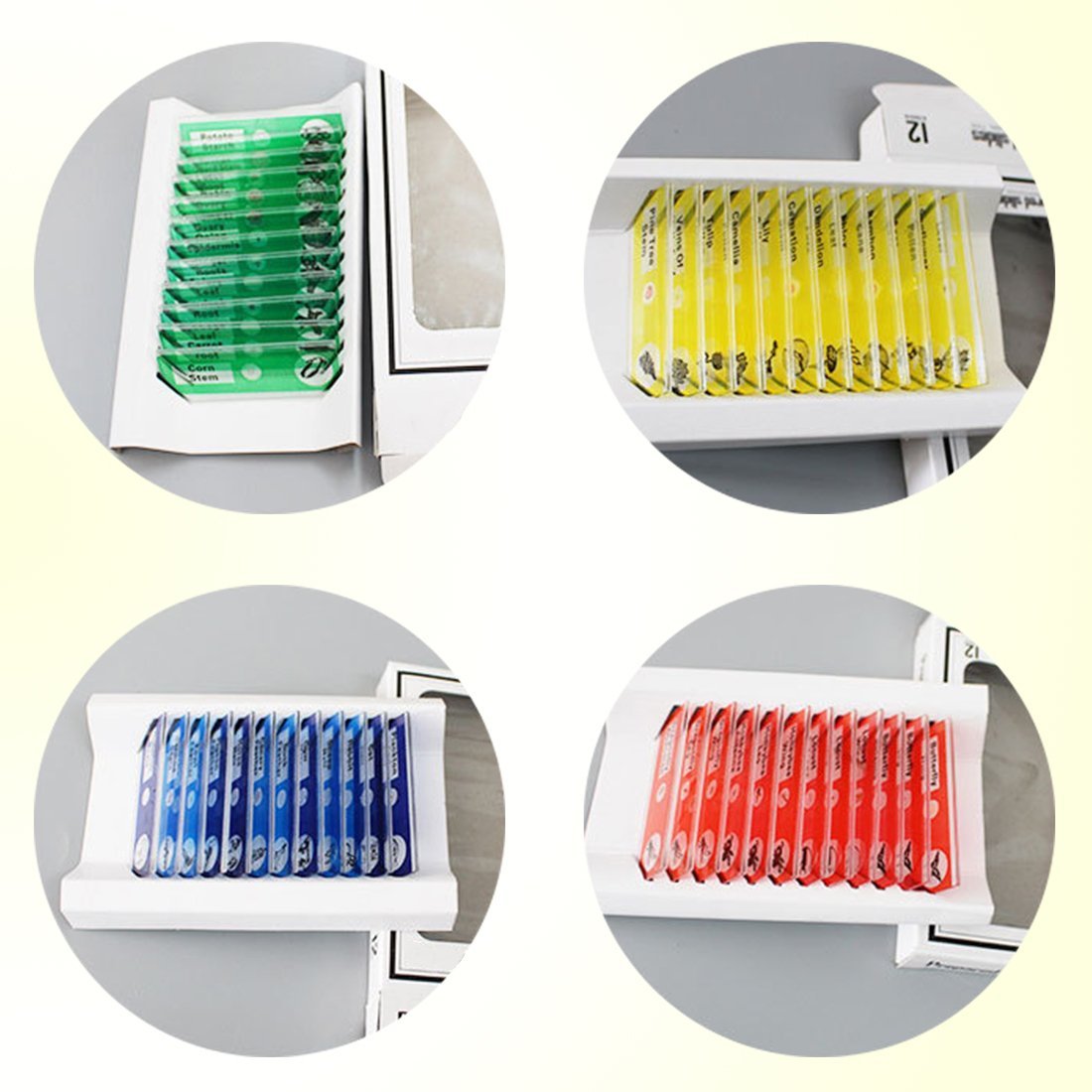 QIXINSTAR 48pcs Prepared Plastic Microscope Slides Biological Specimen with 4 Boxes for Children Student Enlighten Education