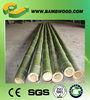 Moso Bamboo poles for agricultural