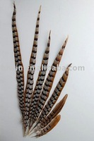 Reeves Pheasant Tails