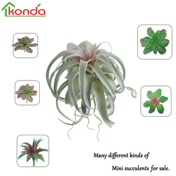 Air Plant Type And Indoor Plants Use Ornamental Miniature Artificial