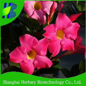 Adenium Thailand, Adenium Thailand Suppliers and Manufacturers at