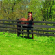 Fentech Top Quality Black Flexible Electric Rail Horse Farm Fence