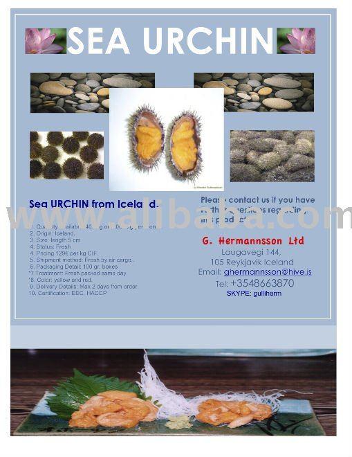 Sea Urchin roe fresh by air cargo.