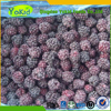 Agricultural Products Organic frozen blackberry in bulk