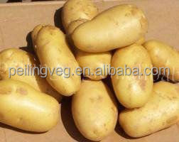 fresh yellow potato (New crop)
