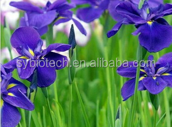 Viola odorata& violet flower extract powder 10:1