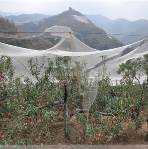 Yemen used plastic bee net/anti hail net for crops,Weave 13 mesh,plastic plate anti mesh net against hail for tree plant fruits