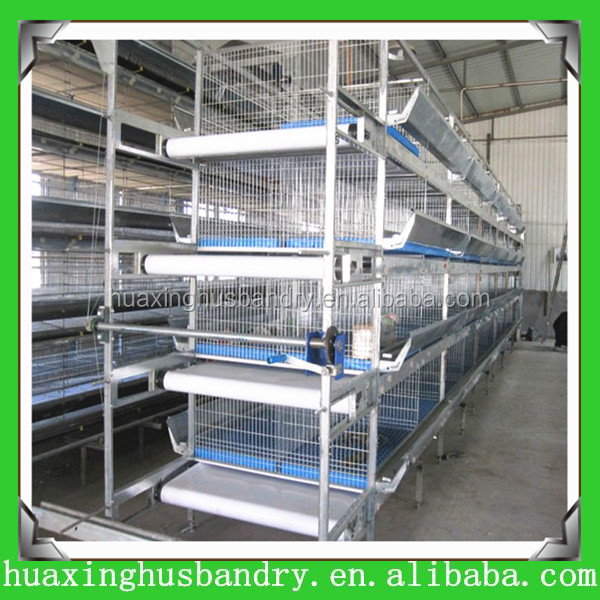 Professional strong automatic quail cages and equipment