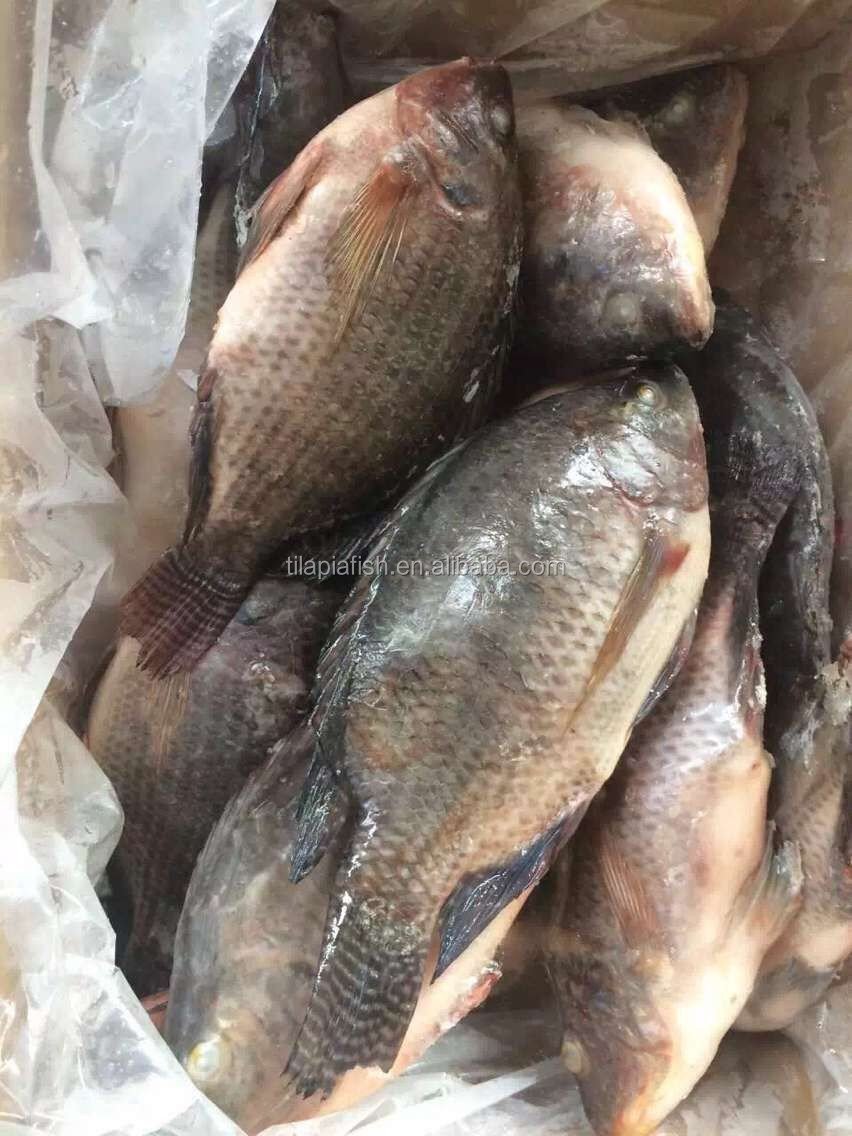 Big Size Tilapia Fish Frozen Tilapia