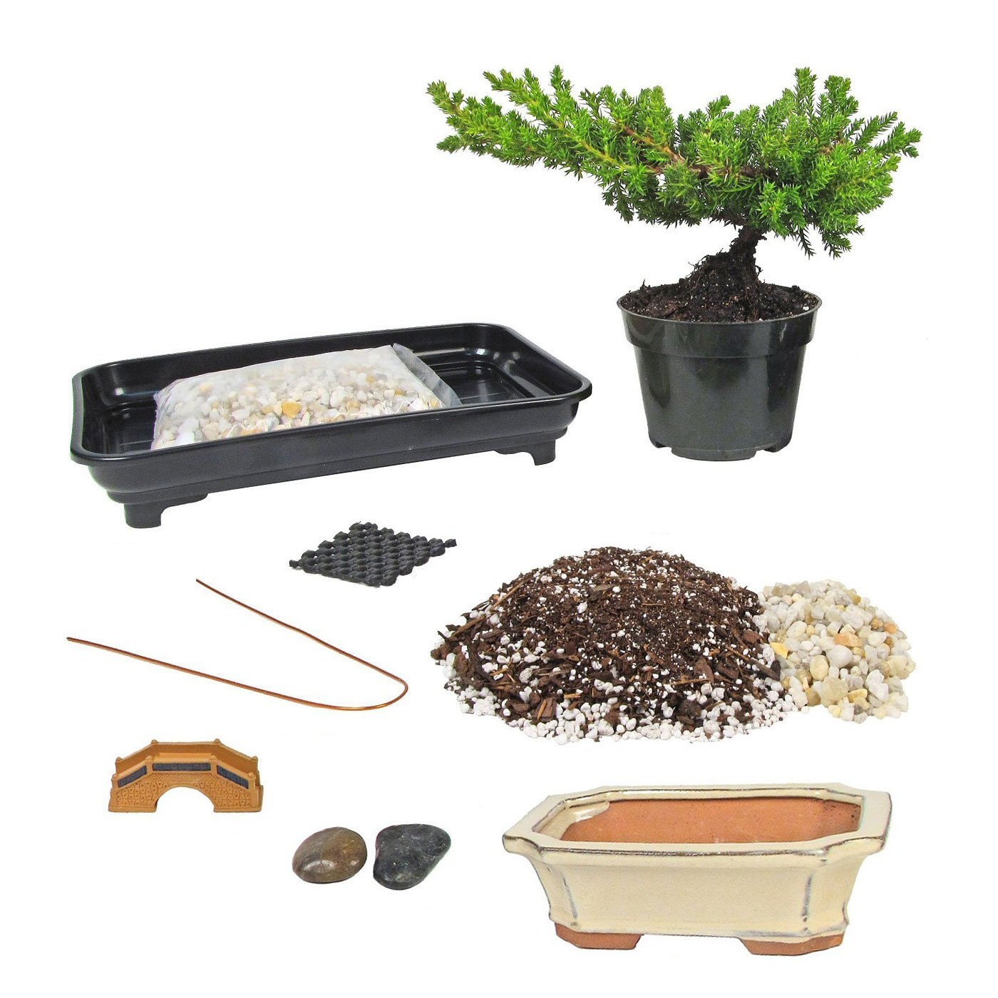 Eve's Deluxe Bonsai Tree Starter Kit, Complete Do-It-Yourself Kit with 6 Year Old Petite Japanese Juniper