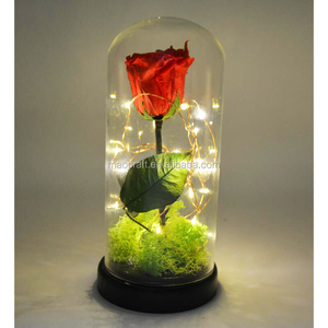 enchanted rose that lasts forever in glass dome